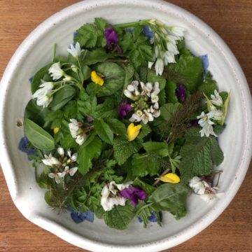 Spring time foraging – what to look for
