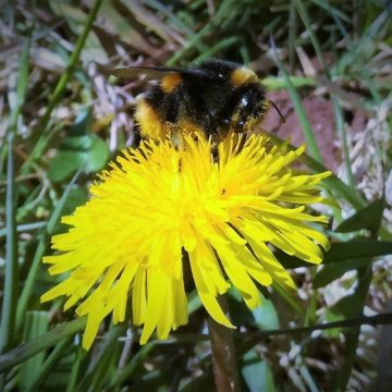 Bee happy – The Community Farm's guide to planting for bees